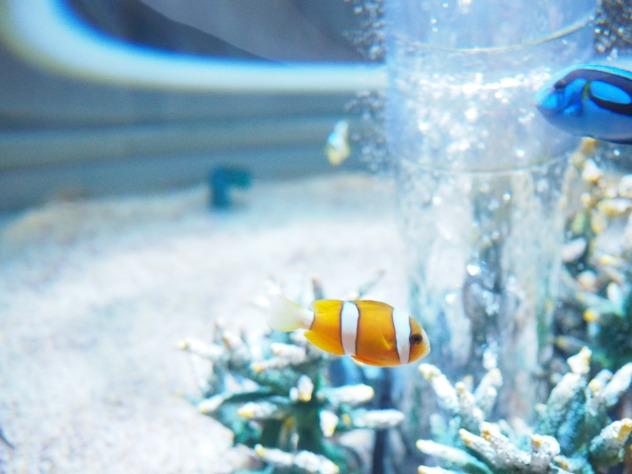 Nemo?